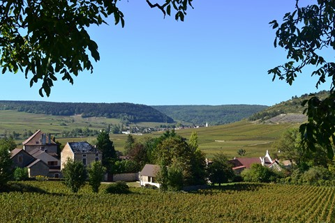 self guided walking holiday France pinot noir vines